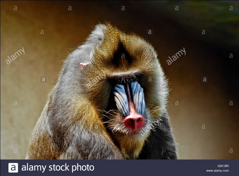 Comment s'appelle cette race de singes ?