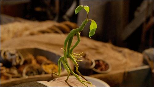 La petite créature que le personnage principal a est un Botruc.Comment s'appelle-t-il ?