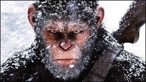 """La saga """"La Planète des singes"""" contient actuellement 7 films."""