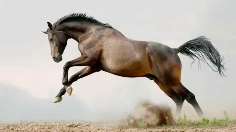 Si un cheval fonce sur toi :