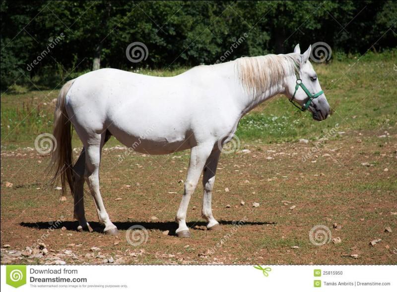 Si tu rencontres un cheval échappé chez toi :
