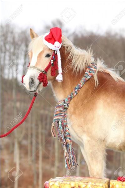 Si tes parents ne veulent pas t'offrir de cheval :