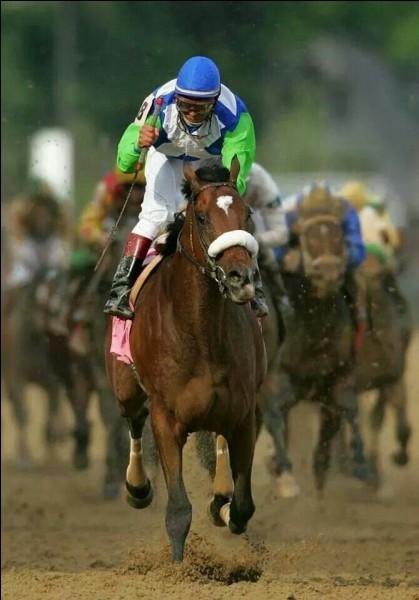 Je suis la race la plus rapide au monde, et ma variation appelée... anglais est la plus rapide. De nombreux chevaux de course célèbres, comme Seabiscut, sont de cette race. Je suis le...