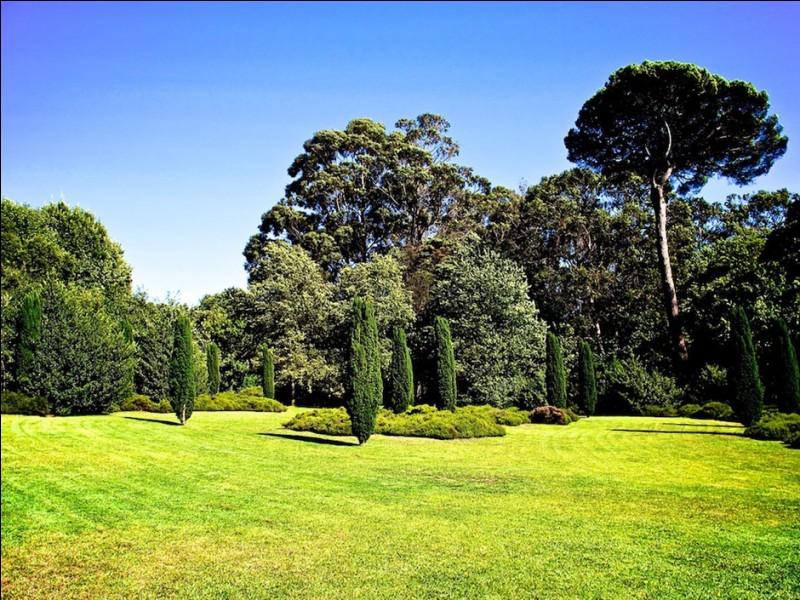 D'après l'Organisation Mondiale de la Santé, combien de mètres carrés de verdure par habitant devrait posséder une ville ?
