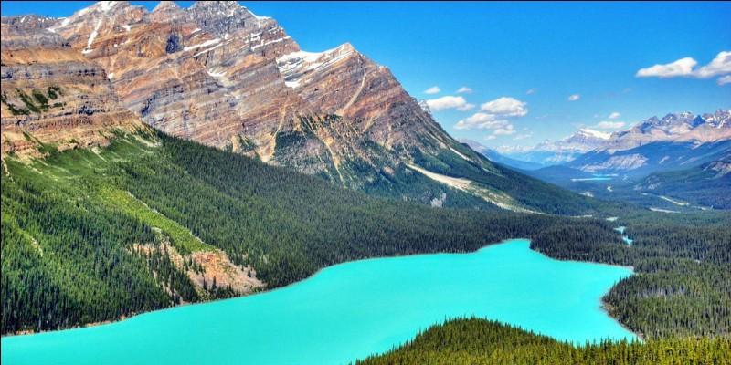 Ton paysage préféré est :