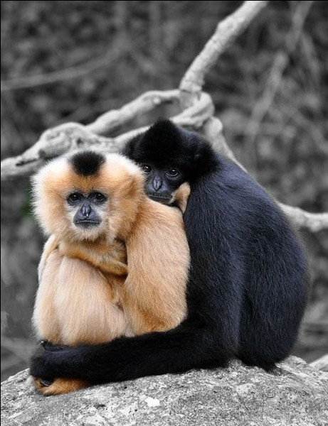 Deux par deux, et les yeux dans les yeux, et la main dans la main, ils s'en vont amoureux... Qui sont ces animaux réputés pour être inséparables et fidèles en amour ?