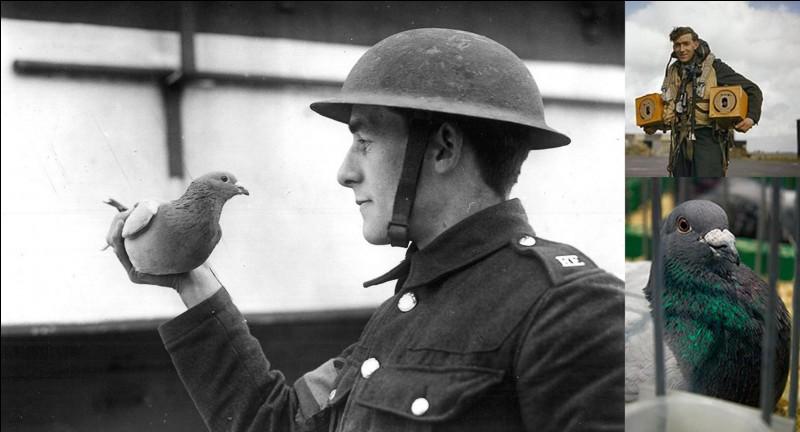 Voici son matricule, NPS.42.31066. Il a été décoré de la plus haute distinction britannique durant la 2e Guerre mondiale. Il a réussi à effectuer par, au moins, deux fois la traversée de la Manche et par ses propres moyens.Qui est-ce et pourquoi ?