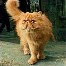 Quel est le nom de son chat ?