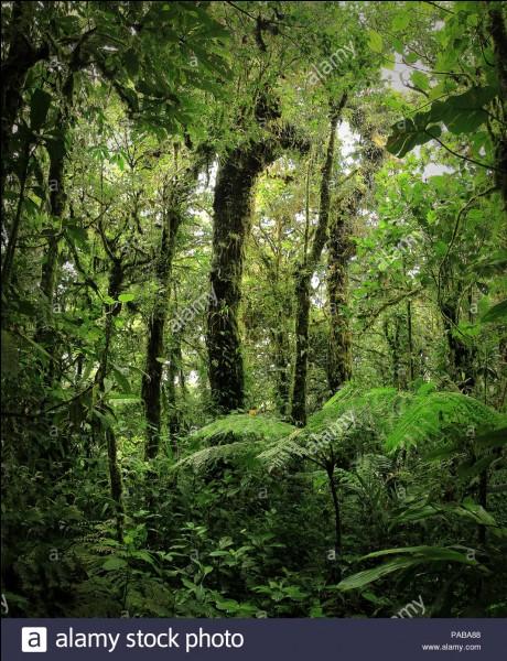 Que sais-tu des forêts ?