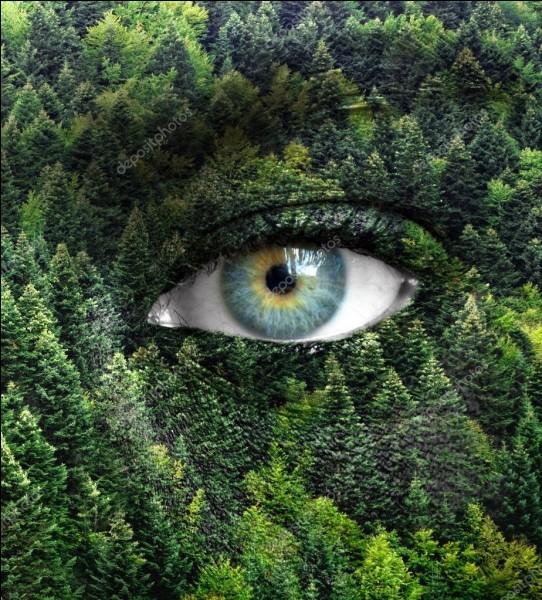 Pour finir, penses-tu être en accord avec la nature ?