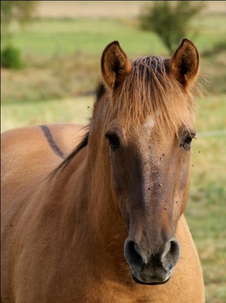 Qu'a ce cheval sur le dos ?