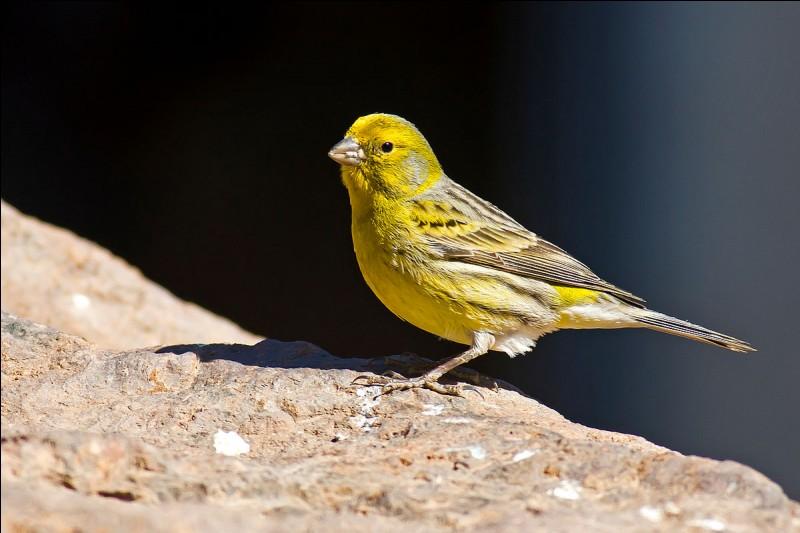 Quel est le mot pour désigner cet oiseau en espagnol ?