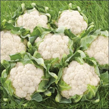 Quel est le mot pour ces légumes en espagnol ?