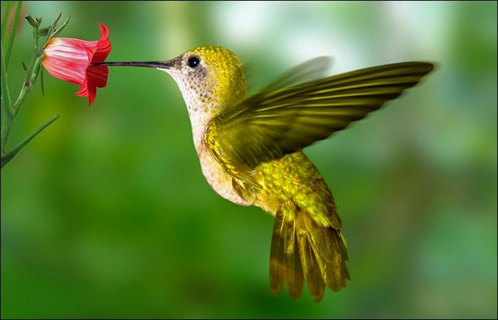 Un animal ou un insecte qui se nourrit de nectar est ou peut être :