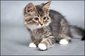 Quelle maison est représentée avec un chat ?