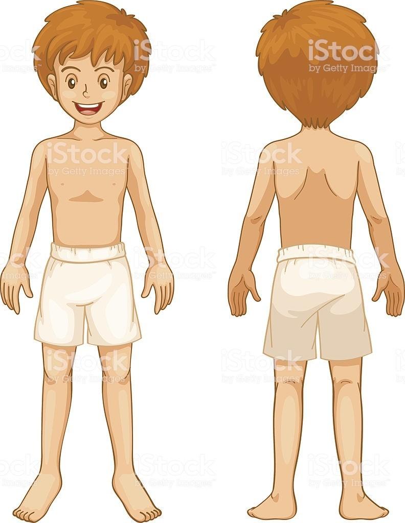 Le corps humain (6)