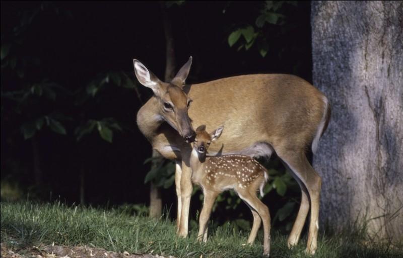 Comment appelle-t-on une troupe de biches et de jeunes cerfs ?