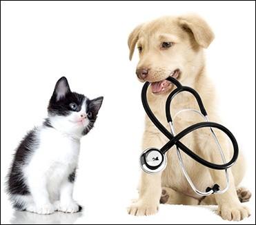 Quand ce professionnel, dont vous avez deviné le nom, intervient pour les soins aux animaux de compagnie, où les consultations se déroulent-elles ?
