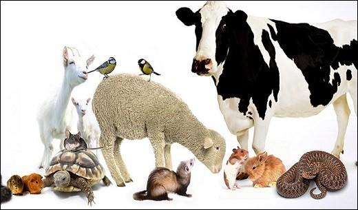 Le professionnel des soins aux animaux peut avoir choisi une toute autre orientation. Laquelle ?