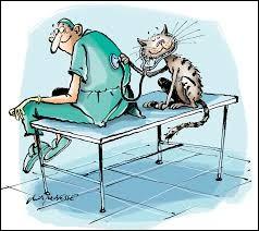 Ce professionnel de la santé animale est en lien avec les vétérinaires qu'il assiste, il est leur bras droit, mais on n'écorche pas son orthographe !