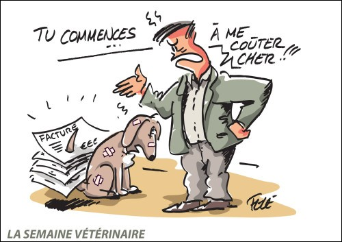 Passe-t-on un concours pour être auxiliaire spécialisé vétérinaire ?