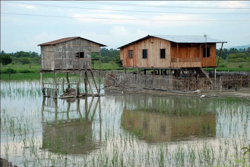 Elles sont faites en mangrove et eucalyptus. On prend les matériaux naturels disponibles : la palme, le bambou et la terre qui sont souvent utilisés pour construire des maisons comme celles photographiées.Trouvez le nom de ce pays, le plus petit pays d'Amérique du Sud, situé à mi-chemin entre les pôles.