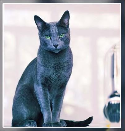 """C'est un chat qui porte chance : avec lui, on voit la vie en """"bleu ... (Complétez son nom !)"""