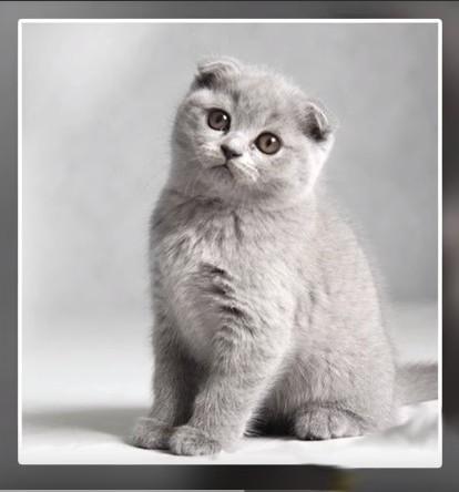 Chats chers et même pas du Cheshire !