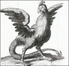 """Que faisait-on avec la dépouille présumée d'un """"cocatrix"""", coq géant avec une queue de dragon ?"""