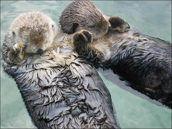 ''I Want to Hold Your Hand'', Beatles. Notre photo nous en montre deux qui se tiennent par la main pour ne pas se perdre. Google m'a donné ''coppia'' alors, j'imagine qu'on est sur la Riviera.Nommez ces animaux qu'on voit ici dans la détente la plus complète ?