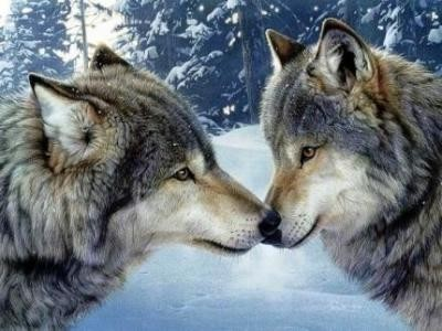 Couples d'animaux