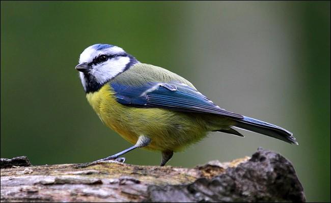 """Quel mot allemand signifie """"oiseau"""" ?"""