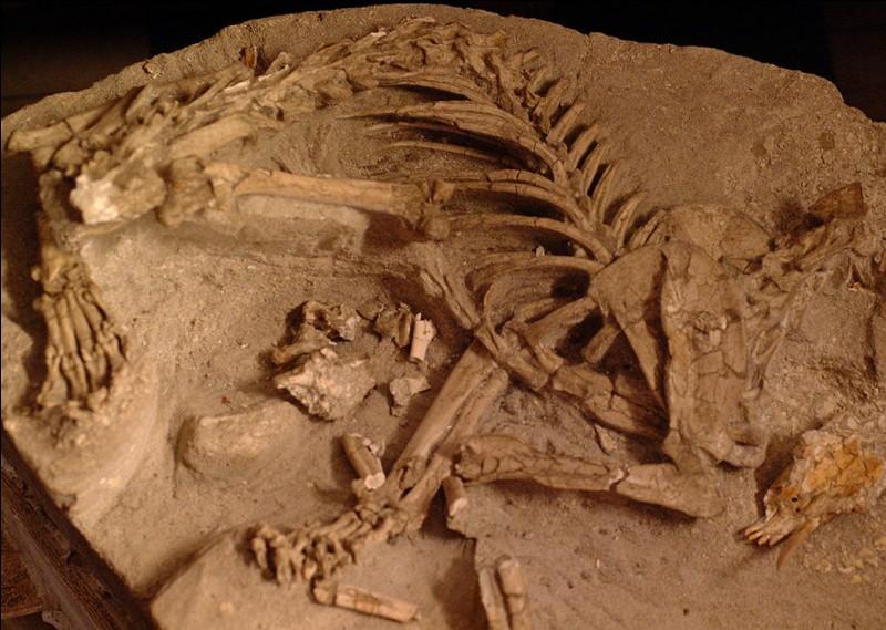 Qui est le plus à même d'étudier les fossiles de dinosaures ?