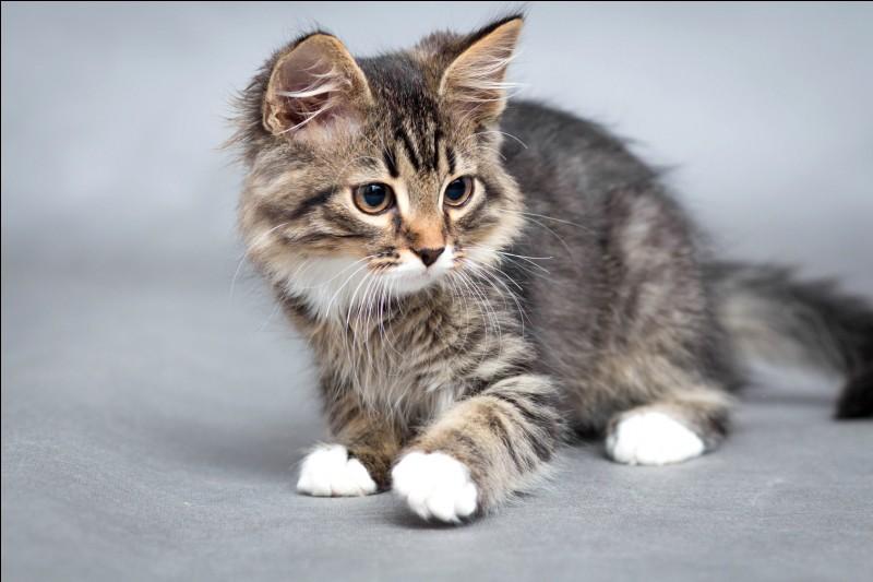 Quel est le nom de cet animal en anglais ?