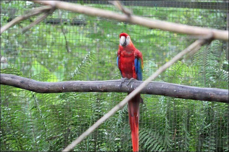 Petite pause détente : C'est le plus grand des perroquets !