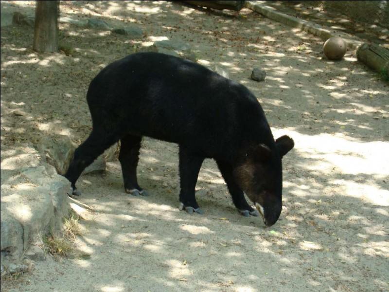 Il existe un tapir qui ne vit qu'en montagne !