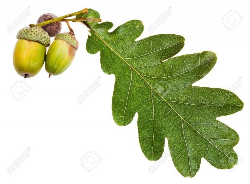 Que désigne une feuille de chêne ?