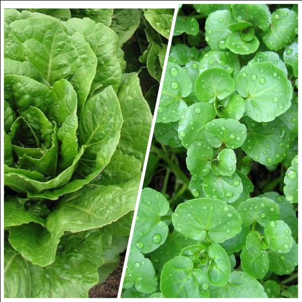 Quelle verdure est riche en calcium ?