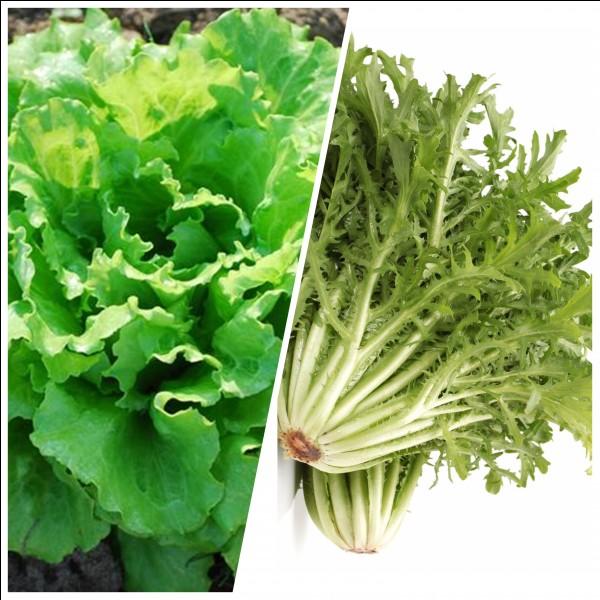 Quelle salade est pauvre en calcium ?