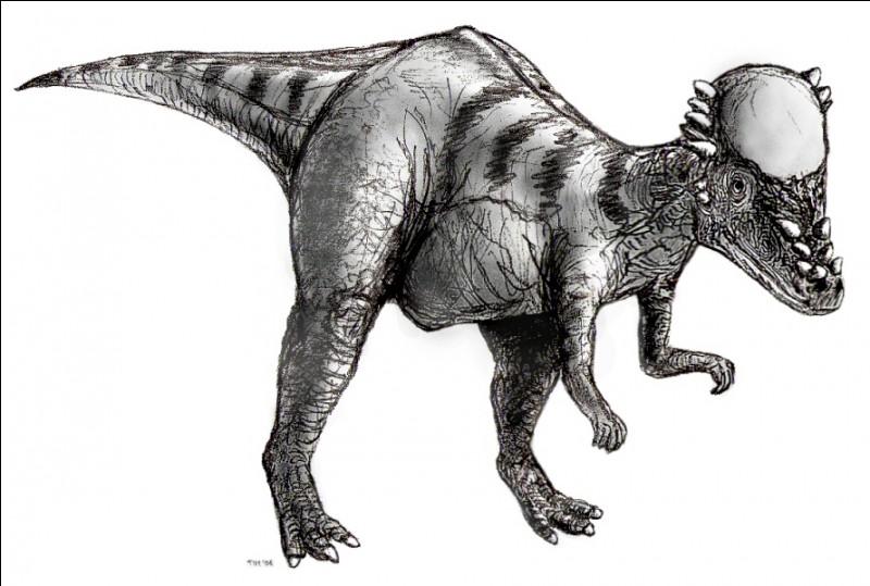Le pachycéphalosaure est...