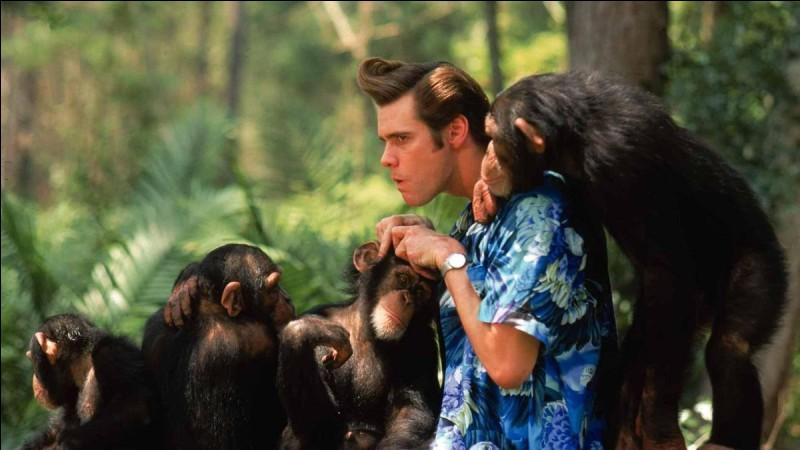 """Dans """"Ace Ventura en Afrique"""", quel animal doit retrouver Mr Ventura ?"""