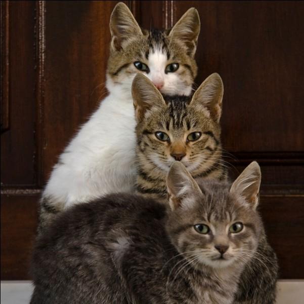 """Dans quel """"Disney"""" avons-nous trois chatons ?"""