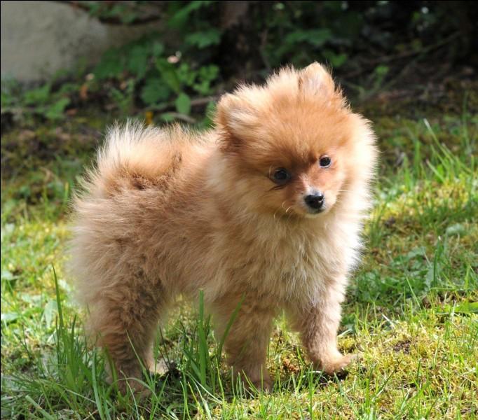 J'adore ce chien ! Le connaissez-vous ?