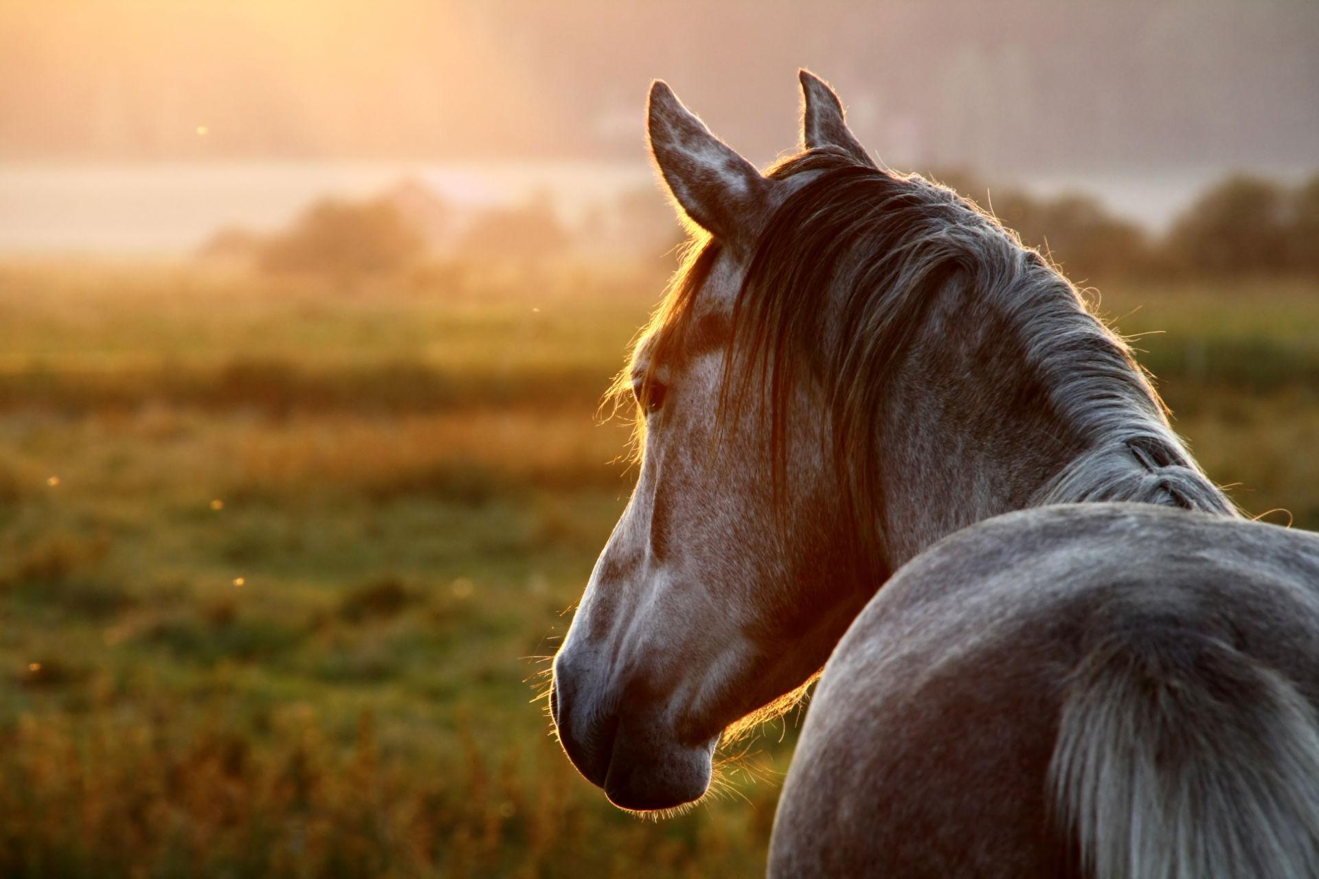 Connais-tu les chevaux ?