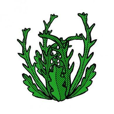 Les algues !