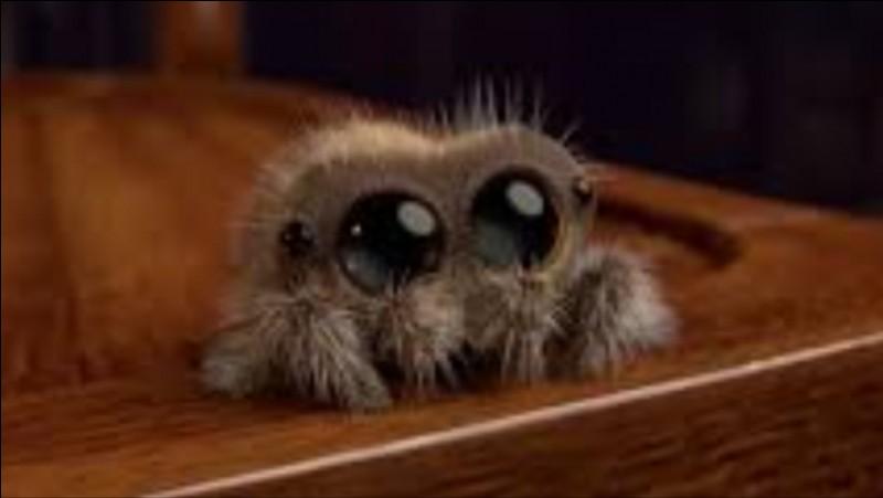 As-tu peur des araignées ?
