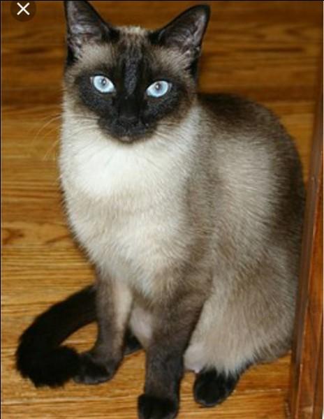 Quelle personne peut se métamorphoser en chat ?