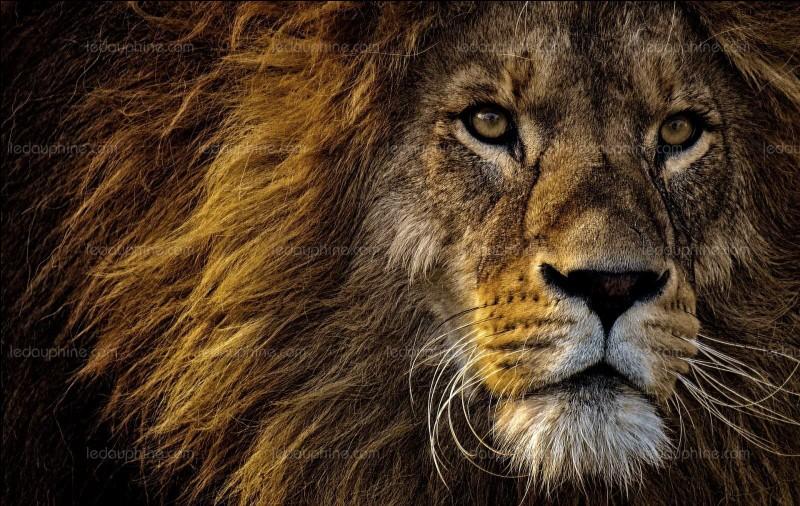 """Qui était surnommé """"Le Vieux Lion"""" ?"""