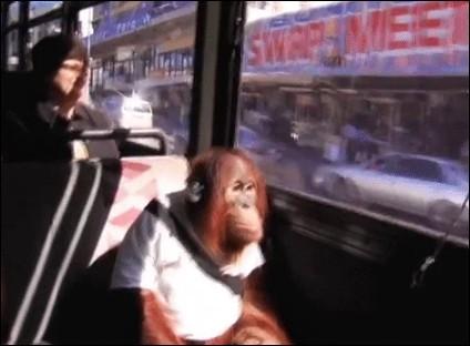 Généralement, le port de la ceinture en autobus est de rigueur.