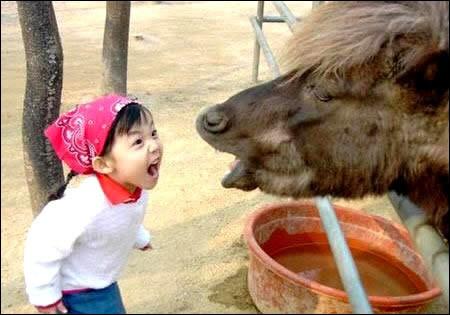 Celle-ci ne laisse personne indifférent partout sur internet : c'est même l'une des plus populaire du web chinois. Une petite fille et un bovidé ont un petit argument : le cliché est bon et l'on superpose, en gros caractères, le mot ''querelle ''.Quel est cet animal, que l'on confond souvent avec un cheval ou une vache ?